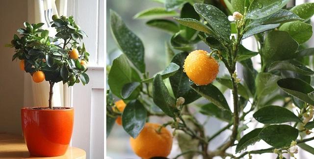 clementine 1