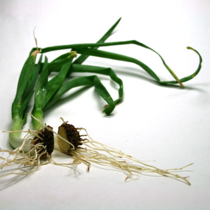 regrow veggies dip feed 1