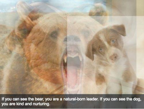 bear e1470413571255
