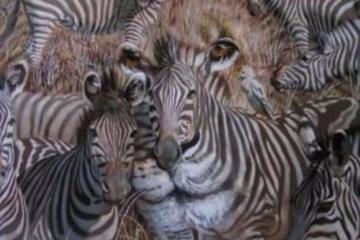 Animals Facebook Image 1200x628 1