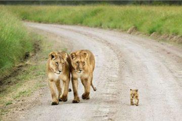 animaux enfants