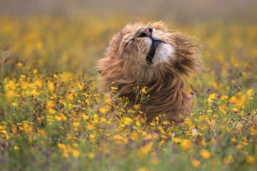 national geographic nature photographer of the year 2017 winners 43 5a323e01b3877 880