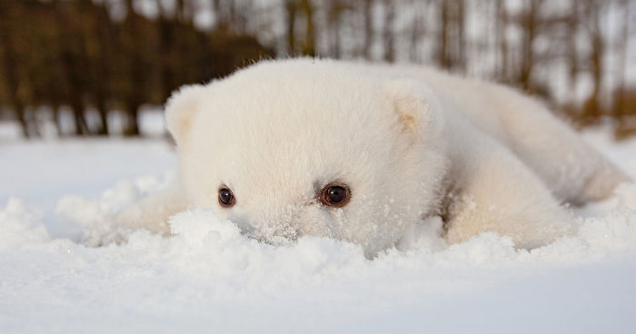 animals first time seeing snow fb1 700