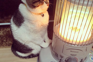 cat heater busao tanryug 1 5a6af13960127 700