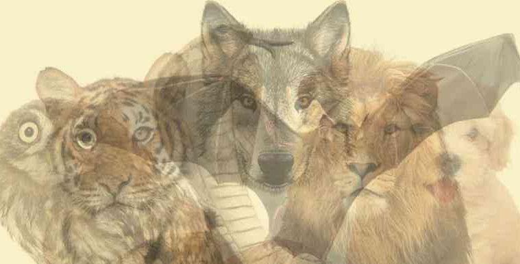 animal image main
