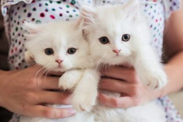 girl holding white kittens