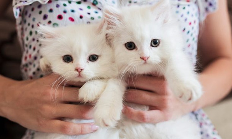 girl holding white kittens