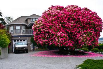 amazing trees 7