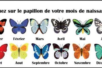 Decouvrez ce que le papillon de votre mois de naissance revele a propos de vous 725x375