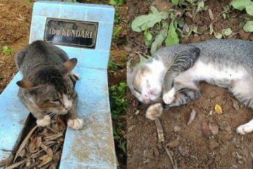 Un chat au cœur brisé est resté un an sur la tombe de son maître décédé
