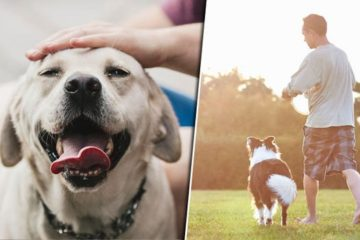 Owning A Dog Allows You To Live Longer According To Scientists