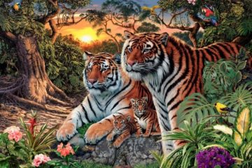 how many tigers in this pic