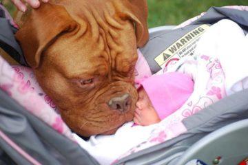 perros y bebés 2 696x466
