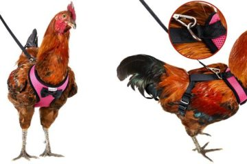 chicken harness amazon yesito fb png  700