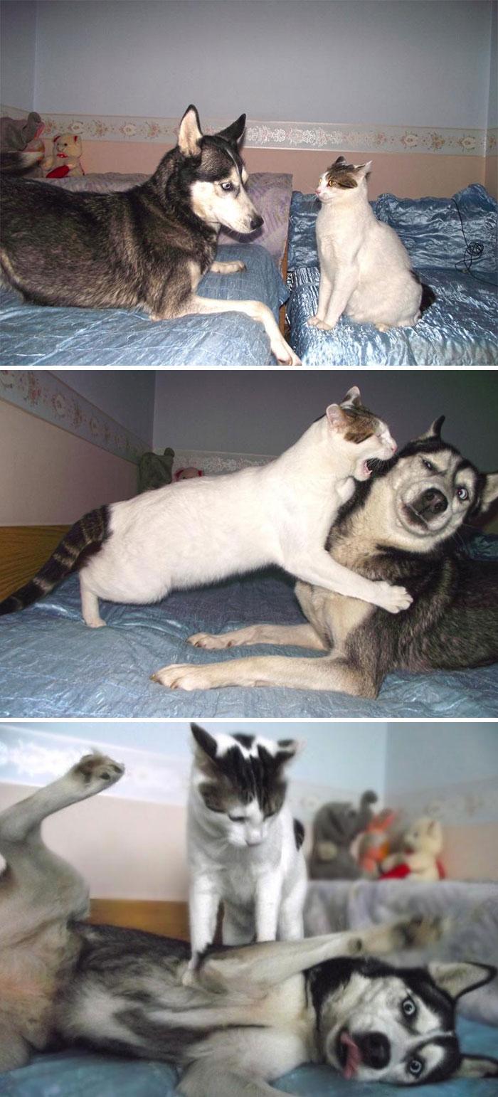 cute huskies 47 5aab9c32b92d9 700