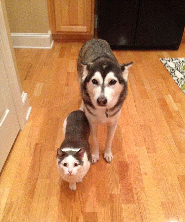 cute huskies 84 5ab10dbce29be 700