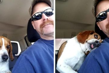 dog scheduled to be put down rescued hugs rescuer hound rescue and sanctuary fb png 700