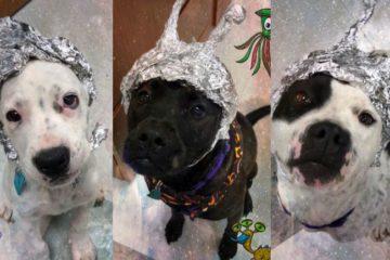dogs credit okc animal welfare
