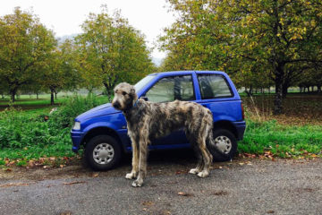 funny large dogs irish wolfhounds 1 5c3c3e353d4ab 700
