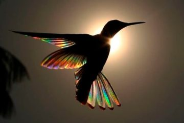 hummingbird wings rainbow christian spencer fb png 700