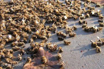 500 million bees dead brazil pesticides fb4 png  700