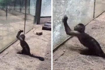 monkey breaking glass zhengzhou zoo china fb5 png  700