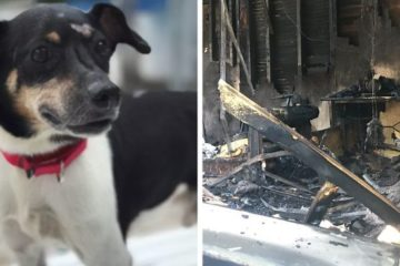 dog zippy saves family house fire leroy butler fb png 700