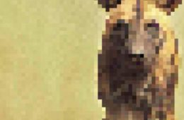 endagered animals pixels extinction 1 1 5d8dd2290f417  605