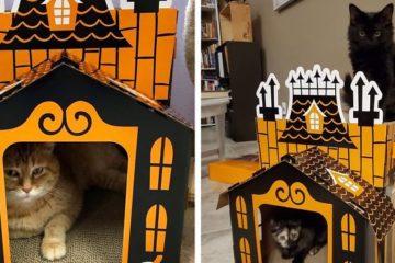 haunted cat house halloween hyde eek target fb png 700
