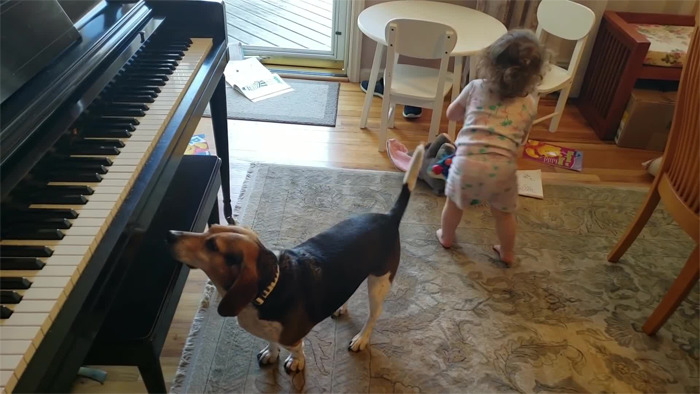 baby dancing dog playing piano 15 5d9adff272a64 png 700