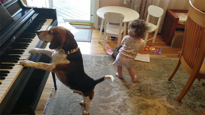 baby dancing dog playing piano 16 5d9adff46da31 png 700