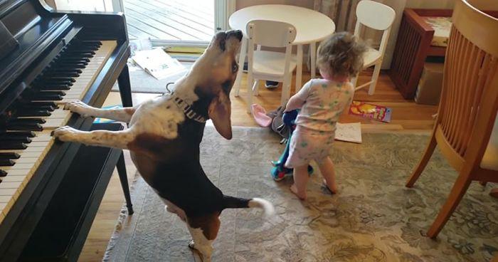 baby dancing dog playing piano fb png 700