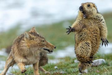wildlife photographer of the year 2019 winners fb