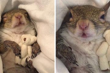 jill rescue squirrel miniature teddy bear this girl is a squirrel 5dd25ba99f5d2 700