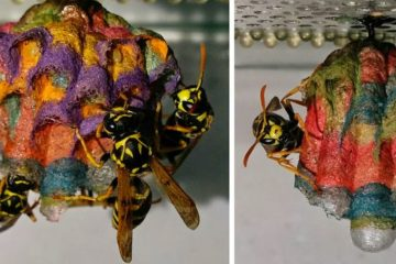 colorful paper wasp nests rainbow mattia mechetti fb  700 png