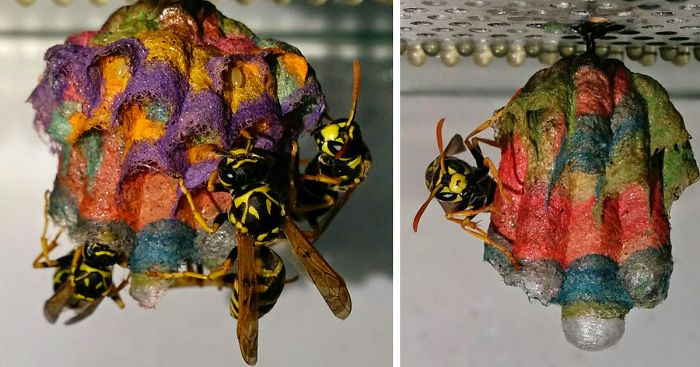 colorful paper wasp nests rainbow mattia mechetti fb  700 png