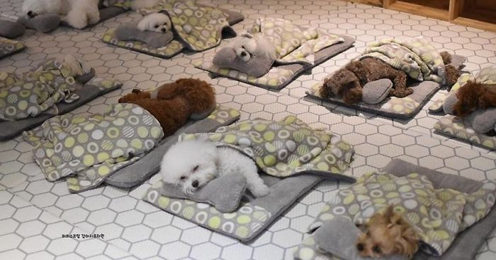 dogs nap time puppy spring daycare center fb4 png  700