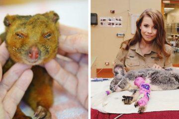 australian bushfires the irwin family help fb14 png 700