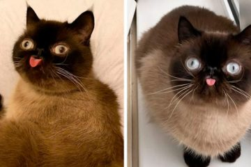 funny cat king of blep ikiru fb2 png  700