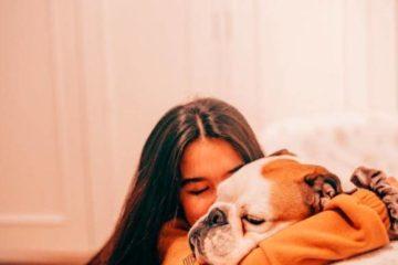 animal love first